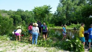 "Community Cleanup! ""Good"" plant or ""Bad"" plant? : Plant ID/Invasive Species Removal at Nature At the Confluence @ Nature At The Confluence 