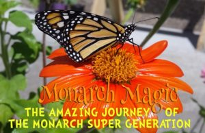 Monarch Magic: The Amazing Journey of the Monarch Super Generation @ Nature At The Confluence Campus | South Beloit | Illinois | United States