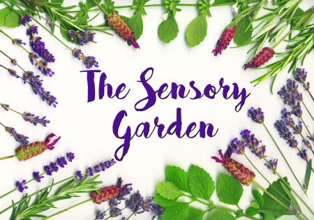 The Sensory Garden featuring Mark Dwyer, Director of Horticulture – Rotary Gardens @ Nature At The Confluence Campus