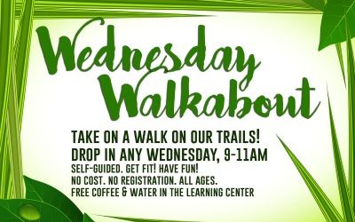 Introducing Wednesday Walkabouts