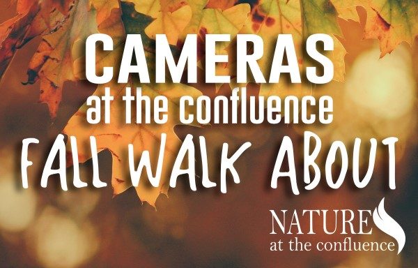 Cameras at the Confluence: Fall Walk About @ Nature At The Confluence Campus