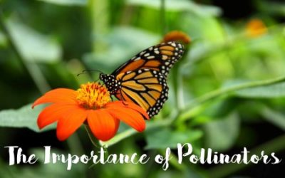 Pollinators – Everyday insects doing extraordinary things for our ecosystem!