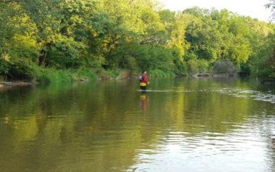 Creek Walking – A whole new way to explore Turtle Creek