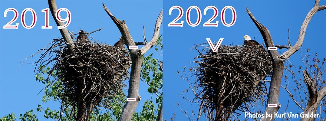 Boney Island eagle nest comparison