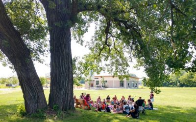 Learn About Our Amazing Cottonwood Trees   Woods Of Wonder Learning Series