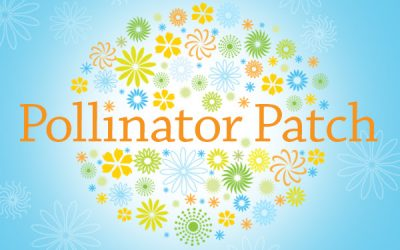 Plan and Plant Now To Support Pollinators!