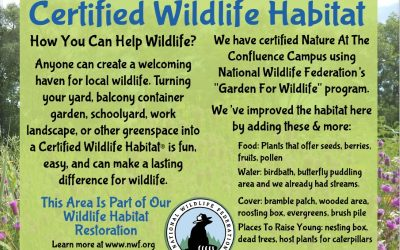 How to make your yard a haven for wildlife