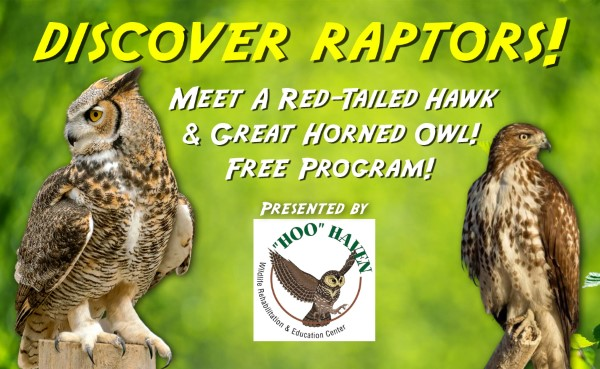 Discover Raptors! Red-Tailed Hawk & Great Horned Owl With Hoo Haven