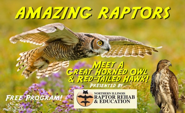 Amazing Raptors! The Great Horned Owl & Red-Tailed Hawk With Northern Illinois Raptor Rehab