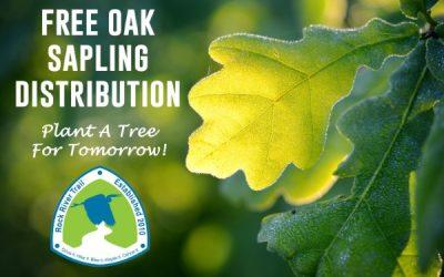 Oak Sapling Giveaway April 17