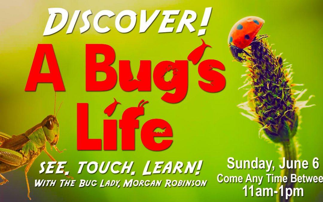 Discover A Bug's Life with the Bug Lady Morgan Robinson