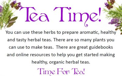 """""""Time For Tea"""" Garden in our Learning Gardens"""